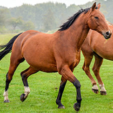 A horse trotting on grass.