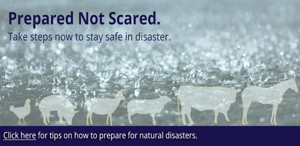 Click on the image for animal preparedness information.